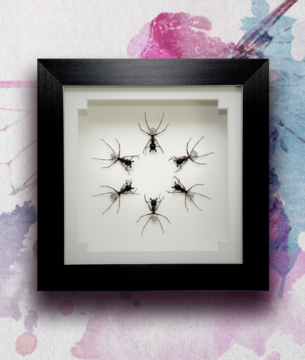 054_Ants_DISCO_Framed_featured