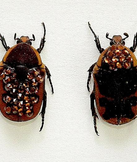 055_Brown-Beetles_Framed_close