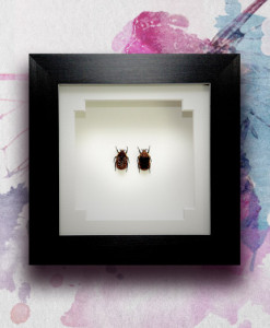 055_Brown-Beetles_Framed_featured