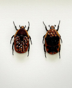 055_Brown-Beetles_Framed_full