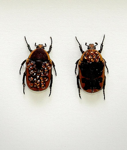 055_Brown-Beetles_Framed_full